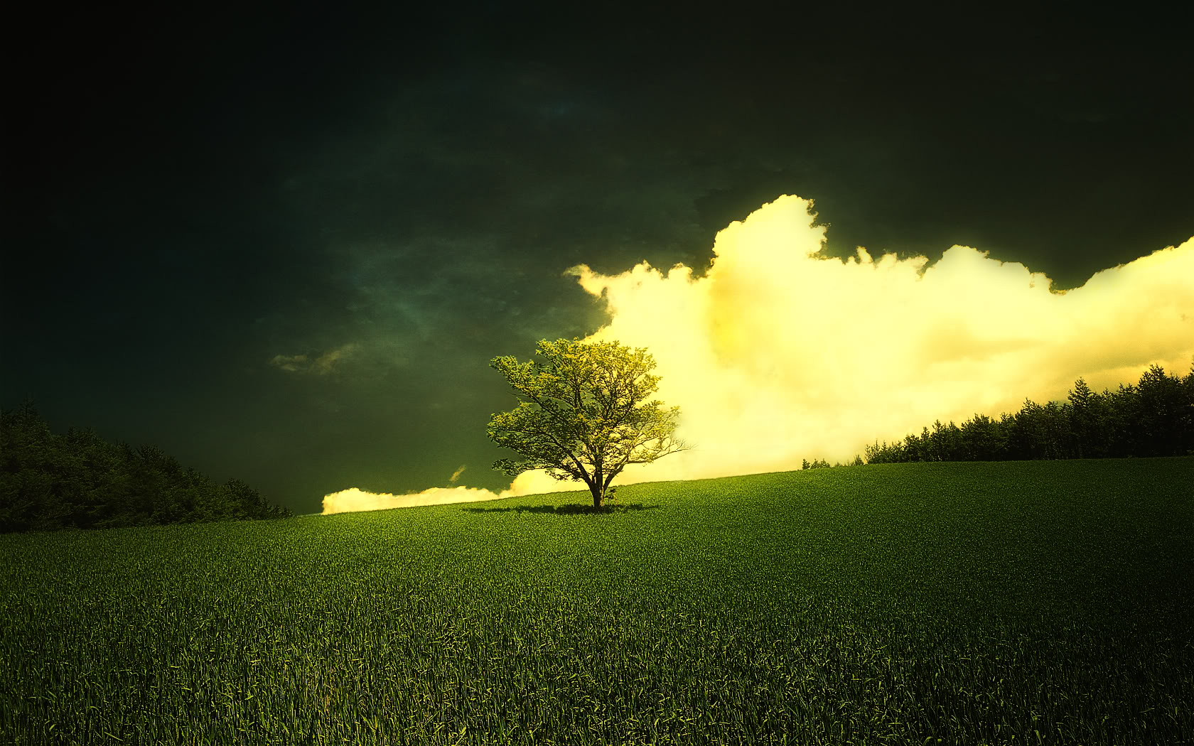 yellow clouds grass image