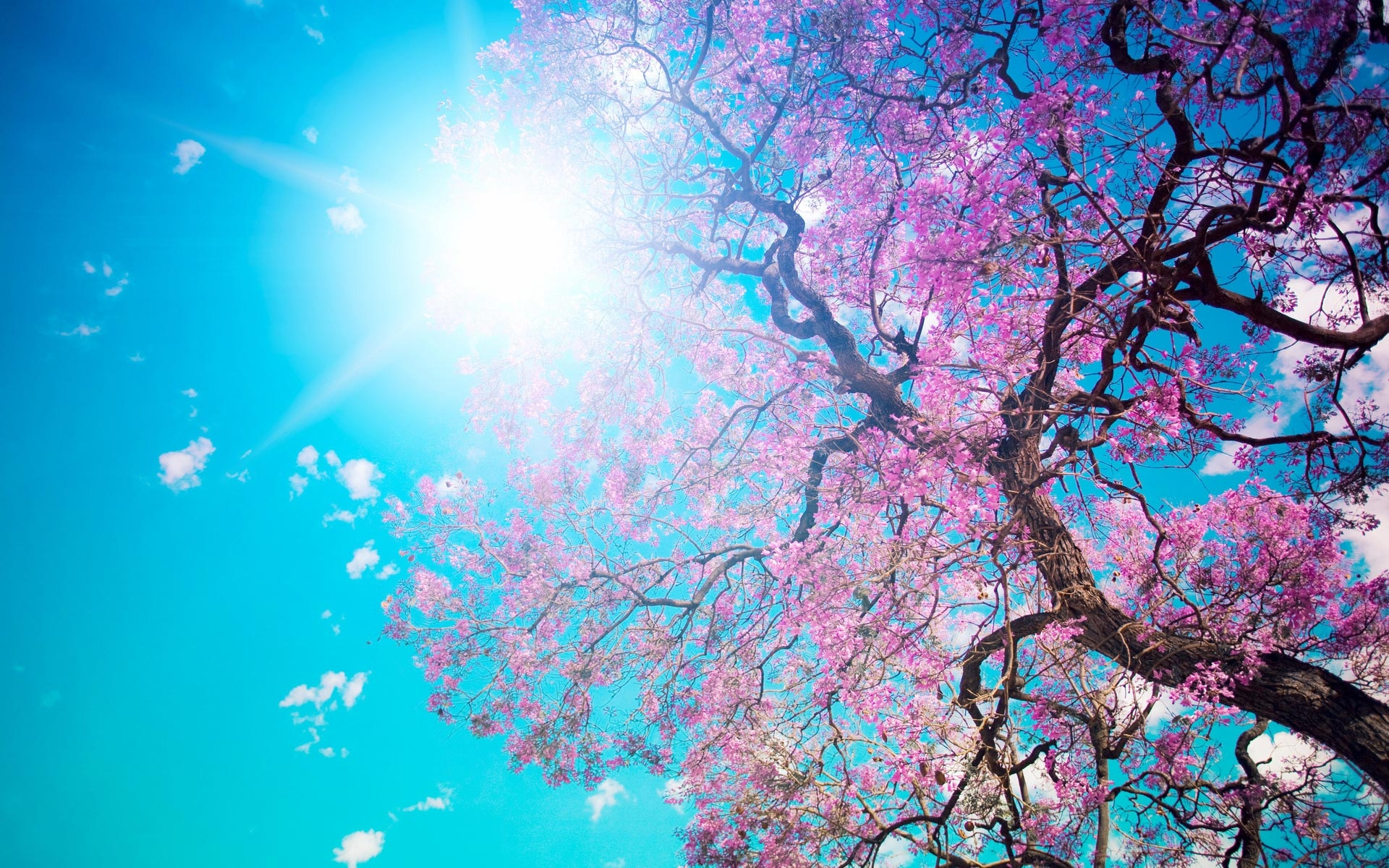 blue sky with pink tree