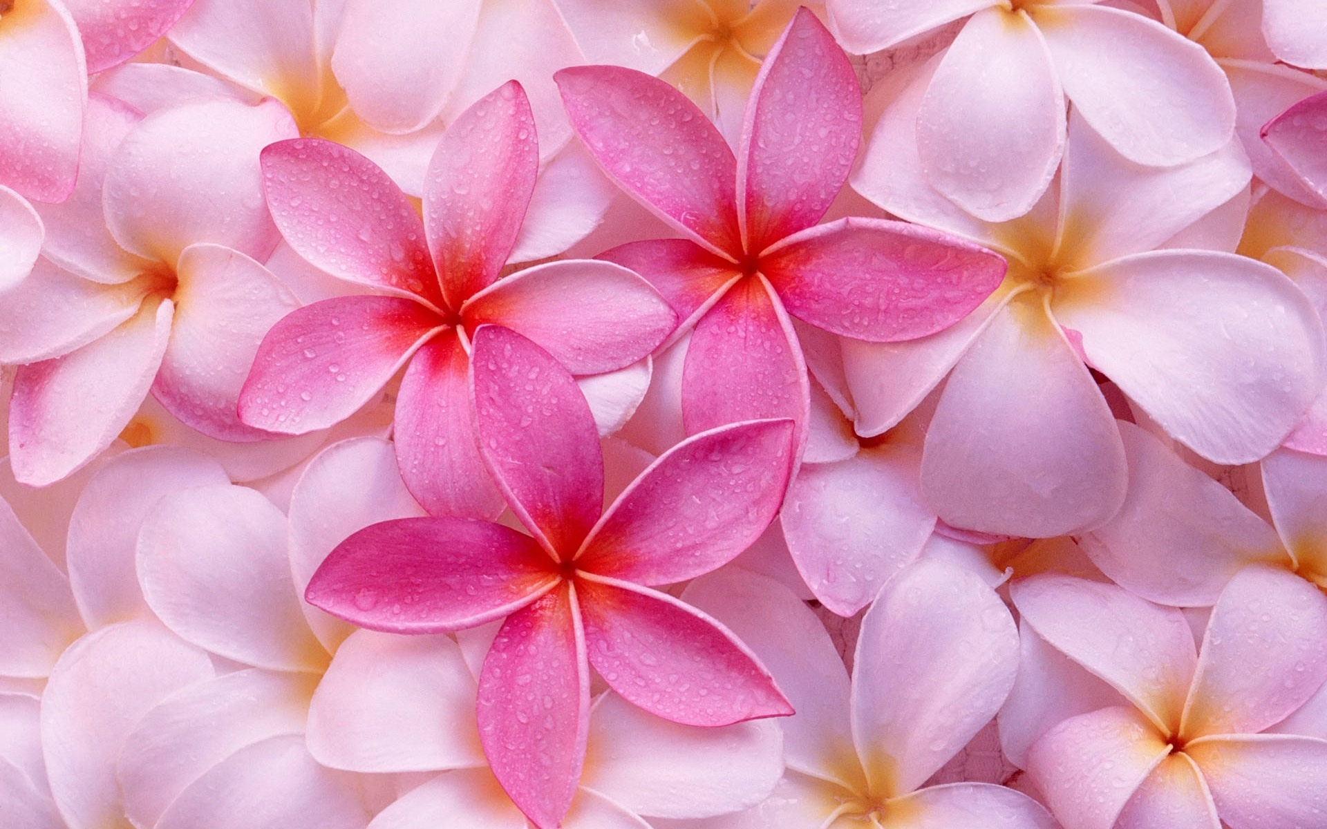 pink flowers image