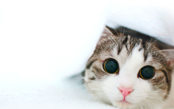 awesome cute cat image