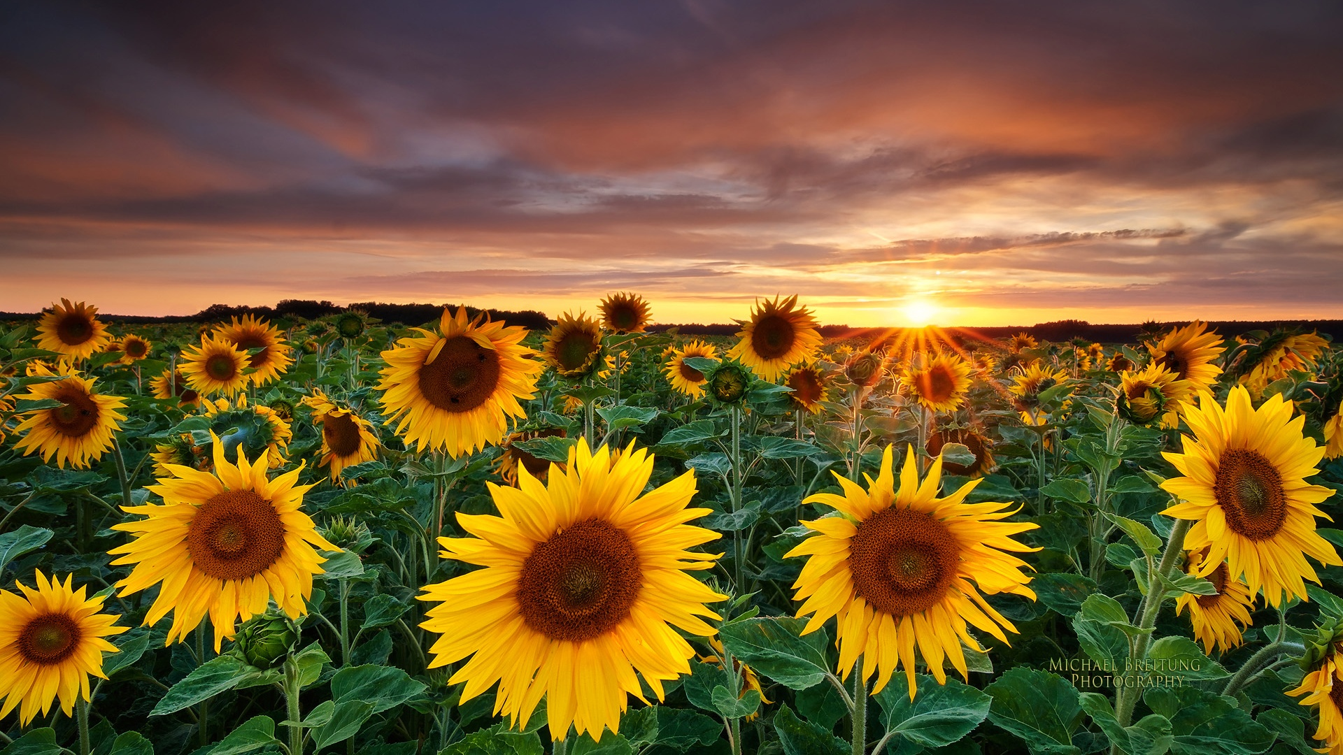 cloudy weather sunflower image