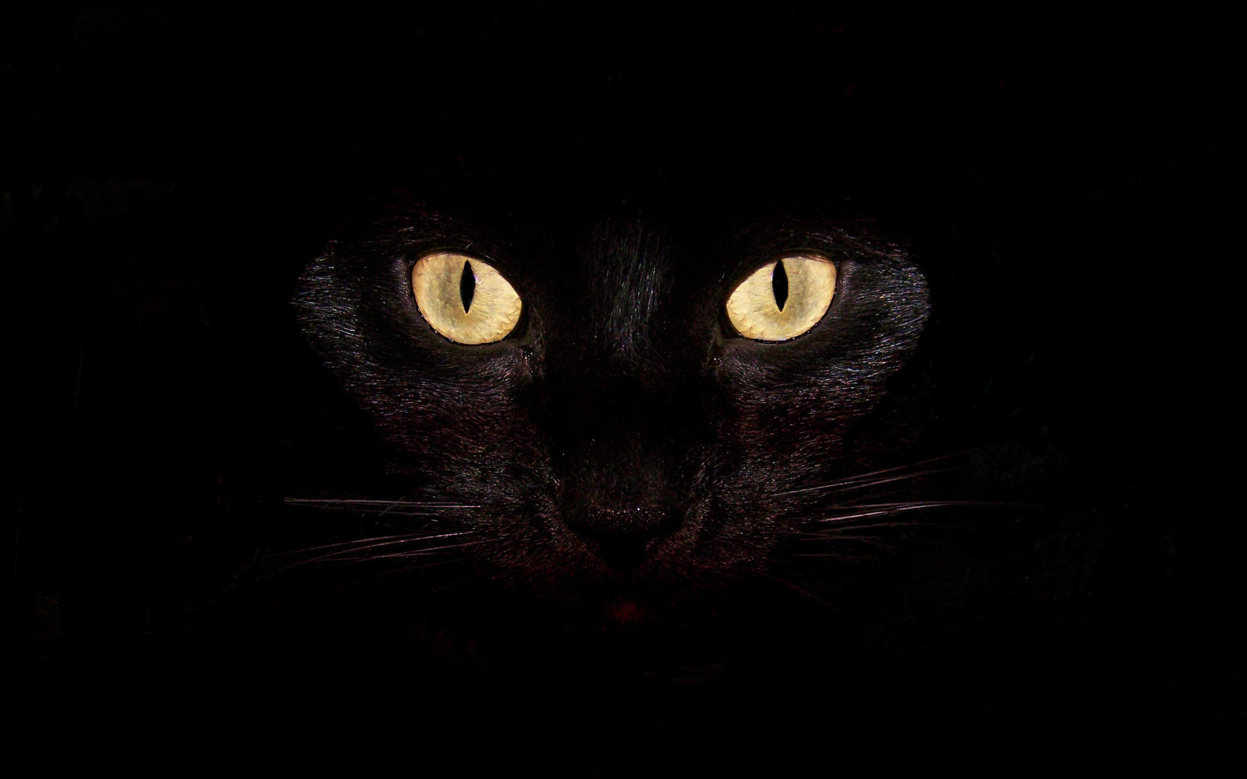 yellow eyes for black cat