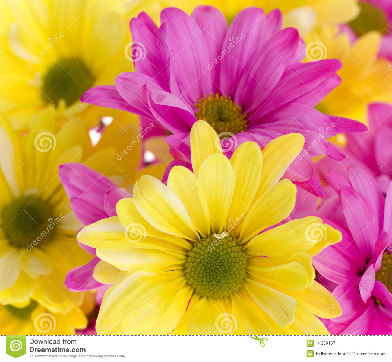 awesome hd pink daisies flower