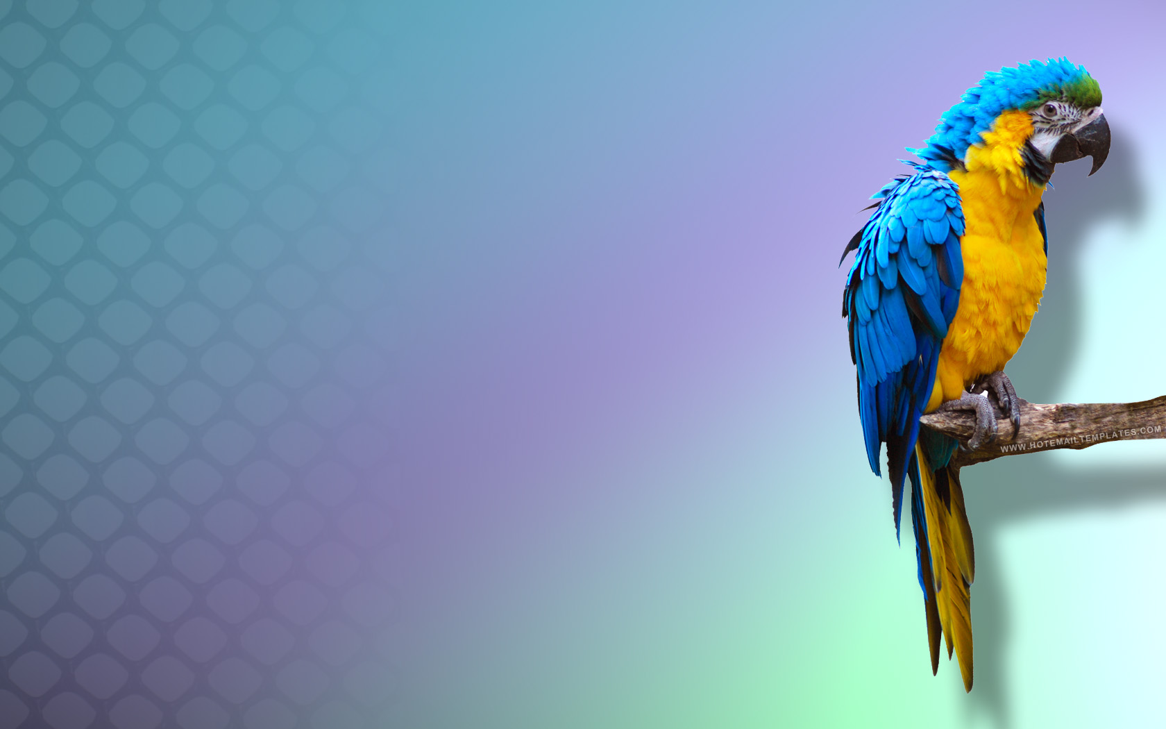 free hd parrot image