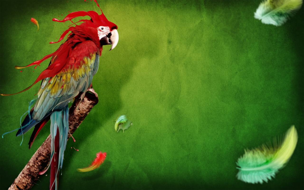 red hd parrot image