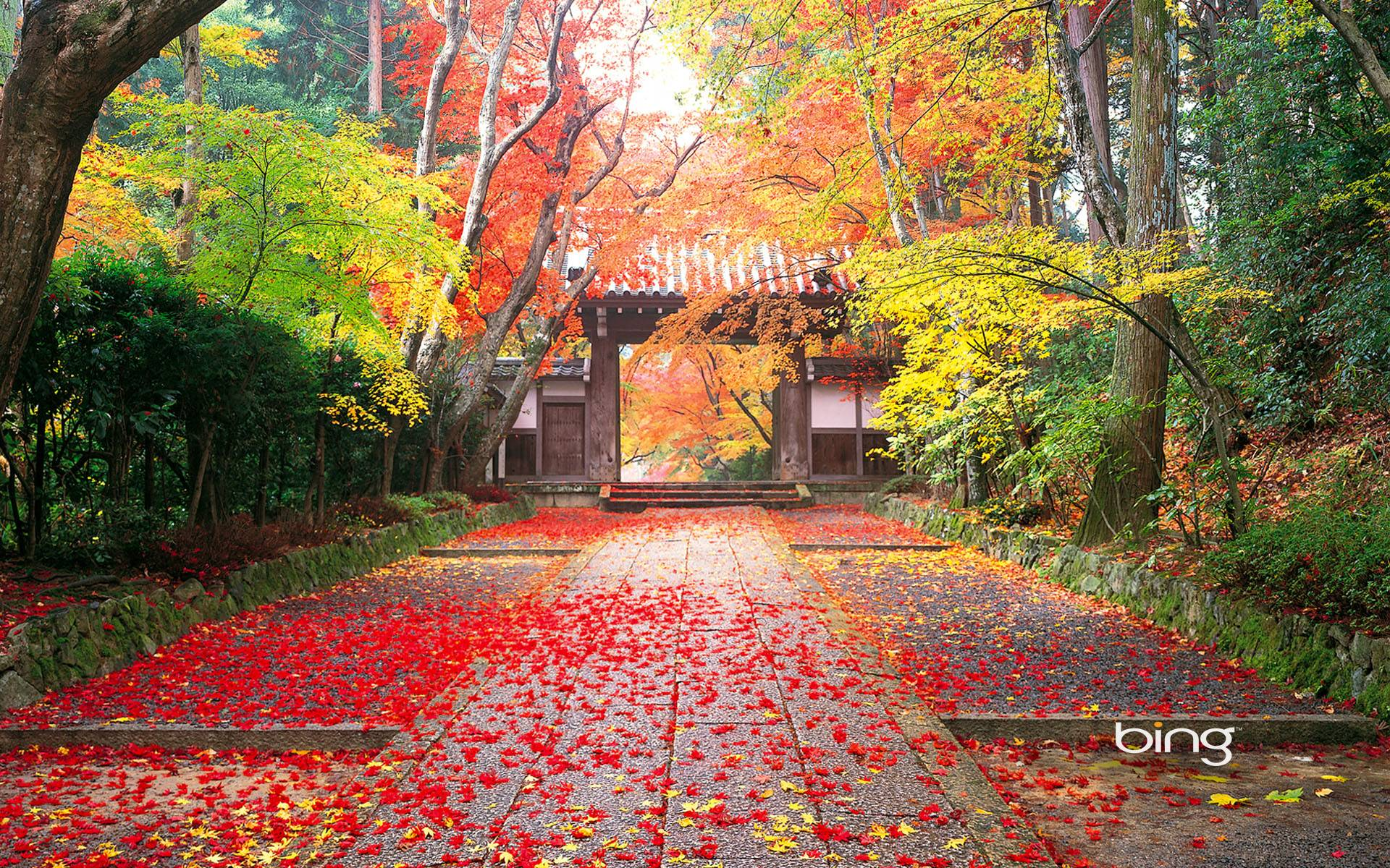 red leaf fall image