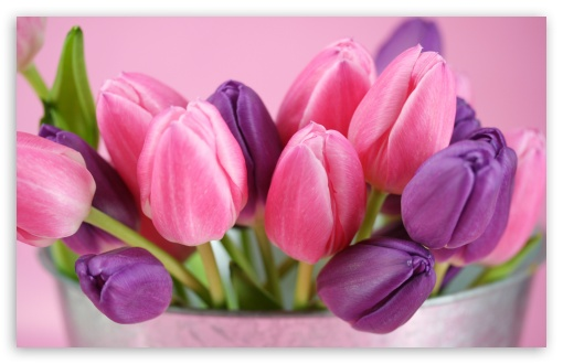 colored flowers image