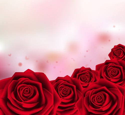 red rose with pink background