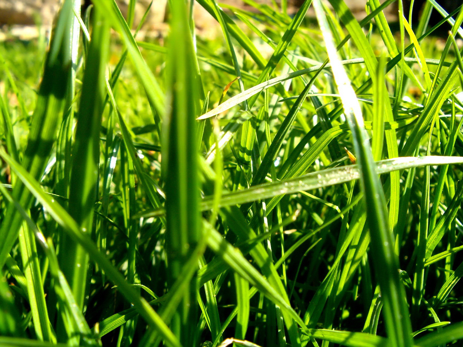 widescreen natural Green Leaf Background