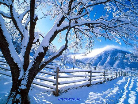 so nice Snow Tree Backgrounds