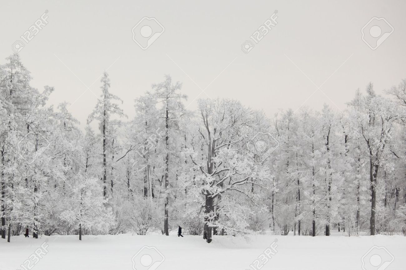 super natural Snow Tree Backgrounds