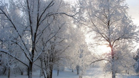 track avenue Snow Tree Backgrounds