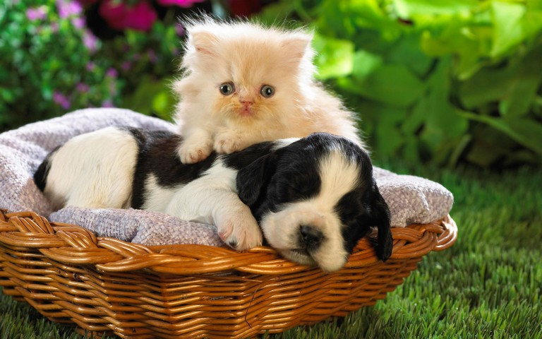 dog with cat cute animal image