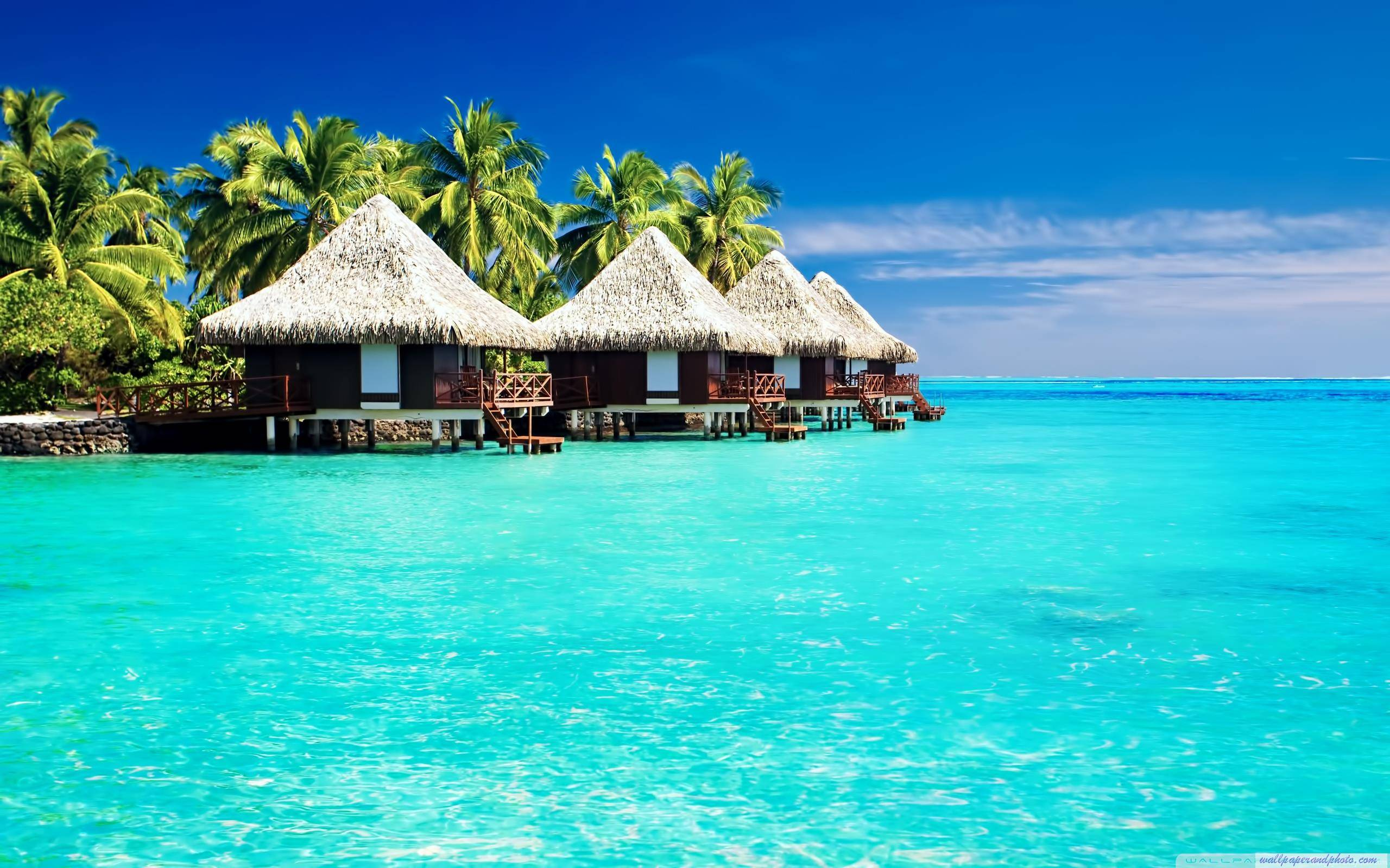 widescreen nature Tropical Wallpapers