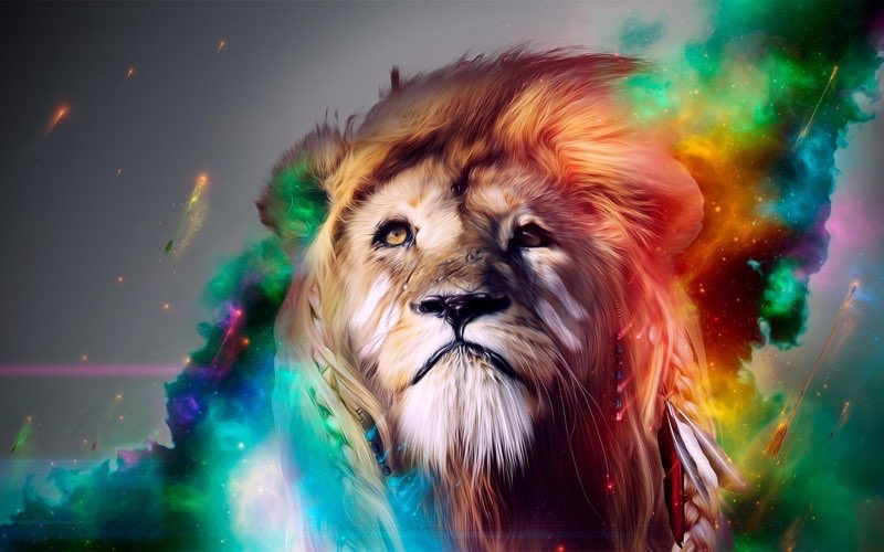 lion HD Cool Wallpapers