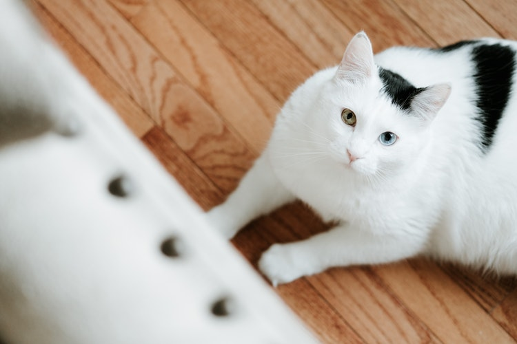 awesome White Cat Photos