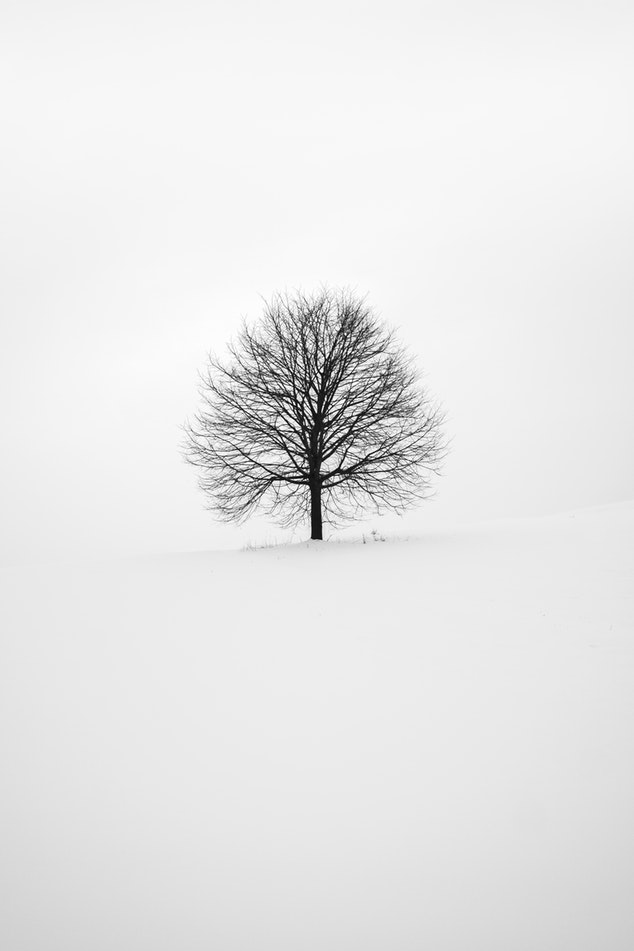 tree nature Black and White Backgrounds