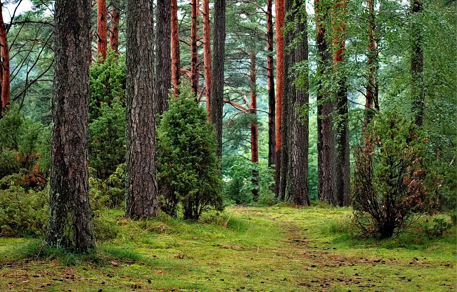 green leafed trees image