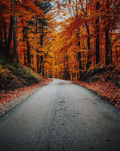 top road Autumn Background