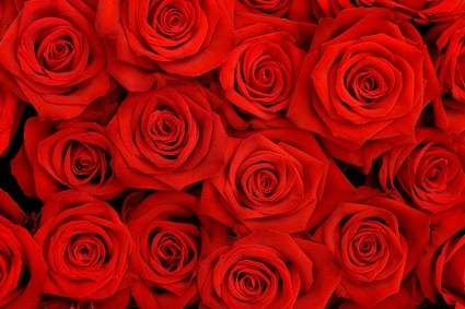 widescreen natural Rose Background