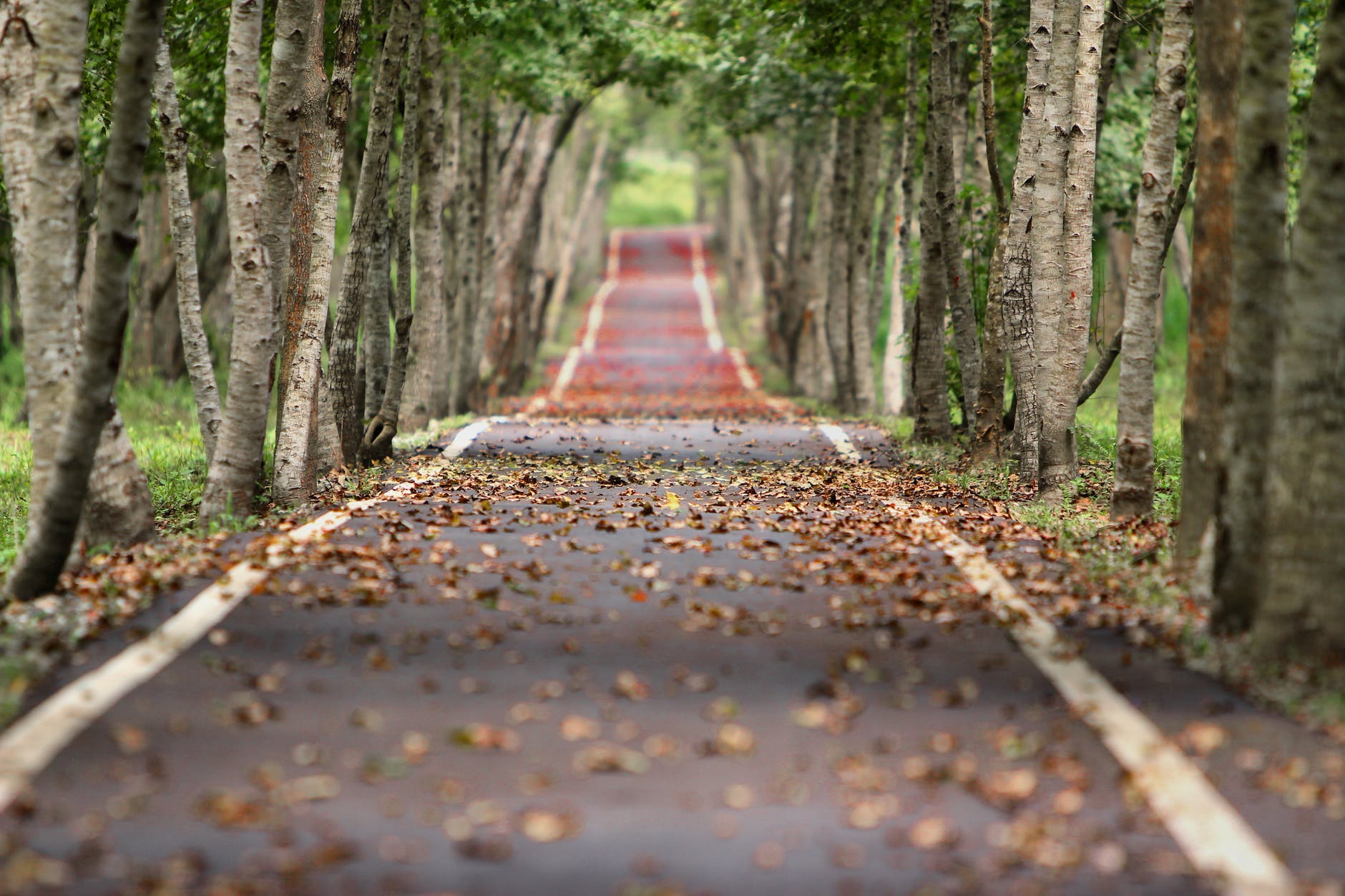 woodland road HD Nature Backgrounds