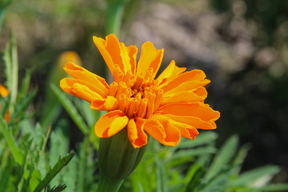 super natural Yellow Flower image