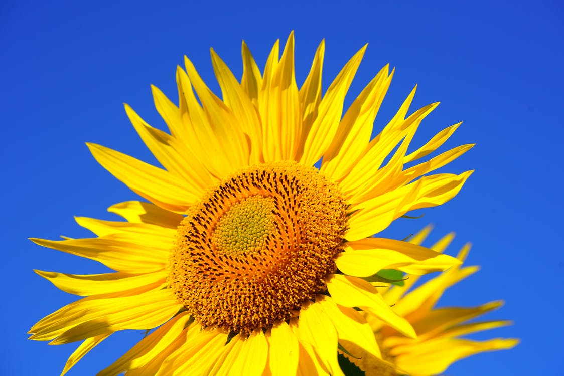 top Yellow Flower image